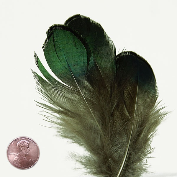 Copper Green Peacock Body Feathers