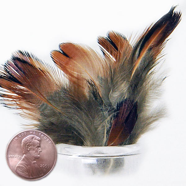 Natural Heart Pheasant Feathers