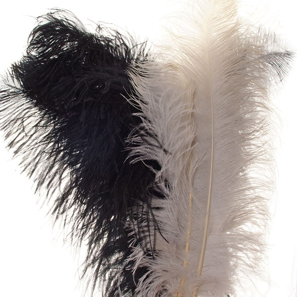 Ostrich Wing Plumes